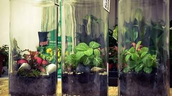 Rośliny w szkle