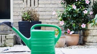 Jak podlewać ogród w czasie suszy?