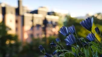 Kwiaty balkonowe na cztery strony świata