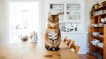 Mieszkanie dla kota i psa – jak przygotować cztery kąty na nadejście czworonoga?