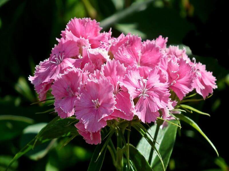 Kwiaty Na Balkon Rynekpierwotny Pl